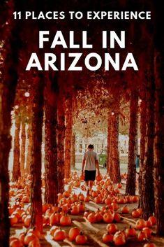 Arizona Falls, State Of Arizona, Arizona Travel, Sedona Arizona, Arizona Trip, Romantic Places, Romantic Travel, Places To Travel, Places To See