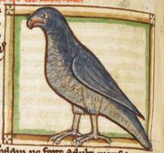 Bird detail from medieval illuminated manuscript, British Library Harley MS 3244, 1236-c 1250, f55v