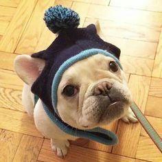 Trop beau avec son bonnet... ... French Bulldog in a Bonnet.