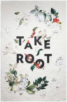 take root......i can't seem to