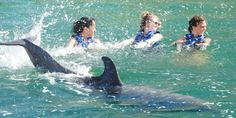 5.2.2015 There's a disturbing truth behind 'swim with dolphins' tourist attractions – Despite their popularity, swim-with-the-dolphin programs have a dark underbelly, and those on the inside are starting to speak out against them.