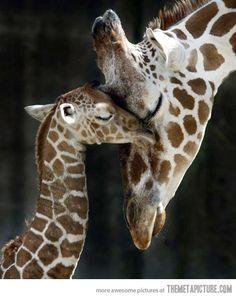 Wild tenderness