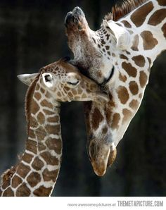 funny-giraffe-baby-mom-cute