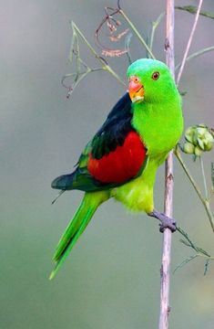 Find and save ideas about Colorful birds, Pretty birds, Beautiful birds and Tropical birds. Pretty Birds, Beautiful Birds, Animals Beautiful, Cute Animals, Kinds Of Birds, All Birds, Love Birds, Tropical Birds, Exotic Birds