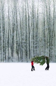 Bringing home the tree...