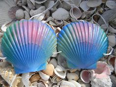 Emily Angelfish Blue Green Hot Pink with Blue glitter Mermaid Sea Shell Bikini Top 4UR Tail SEASHELL Halloween Costume