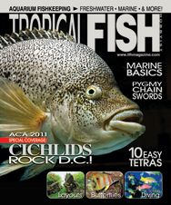 The cichlid-themed July 2011 issue has features on kribs, pinstripe apistos, photographing fish, tetras, scuba diving, and more!