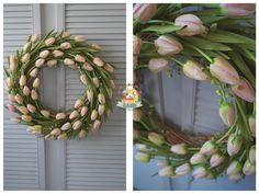 Tulipanowiec :) na specjalne zamówienie... 60 tulipanów