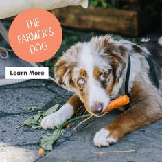As a pet parent, you'll discover yourself wishing to ruin your dog and offer them things which aren't always in the standard needs category. Trained Dogs For Sale, Dog Food Delivery, Wet Dog Food, Pet Food, Dog Collar Tags, Different Dogs, Buy Pets, Homemade Dog Food, Dog Costumes