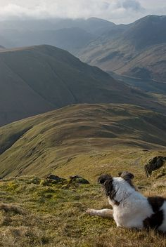 Enjoying the View, Tess looking towards Buttermere, Lake District, England