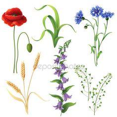 Wildflowers  set — Ilustracja stockowa #60671337