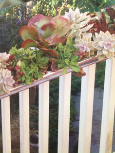 """Sleek Succulent Garden, using recycled rain gutter. From """"Handmade Garden Projects"""" by Lorene Edwards Forkner. Gutter Garden, Diy Garden Projects, Green Garden, Succulents Garden, Container Gardening, Garden Landscaping, House Plants, Fence, Recycling"""