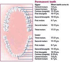canadian dental association fee guide