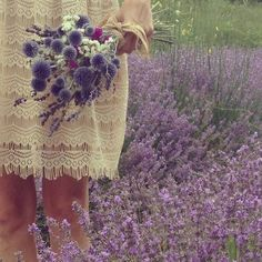 Raindrops and Roses Lavender Cottage, French Lavender, Lavender Blue, Lavender Fields, Lavender Garden, Purple Hues, Shades Of Purple, Purple Flowers, Wild Flowers