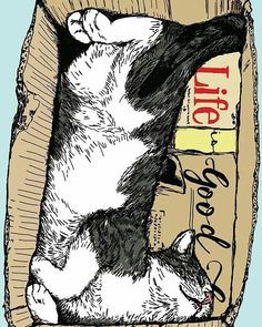 Não sei vocês mas minha vibe de hoje é meio assim... #descanso #domingo #cat #recarregandobaterias