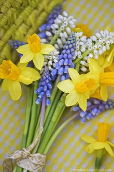 Few things say It's Spring as well as daffodils and muscari