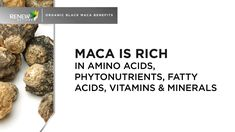 Maca is rich in Amino Acids Black Maca Benefits, Nutritional Supplements, Amino Acids, Dairy Free, No Dairy