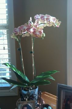 Growing orchids!