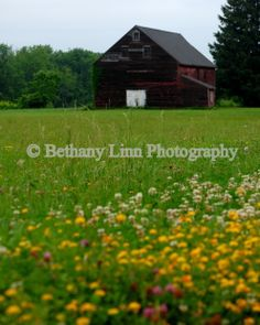 Barn at the edge of a wildflower field.   www.bethanylinnphotography.com