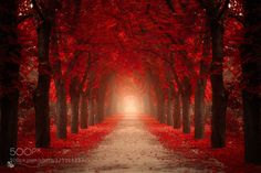 Red by ildikoneer. Please Like http://fb.me/go4photos and Follow @go4fotos Thank You. :-)