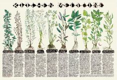 Etsy Focus... Kitchen Medicine and Moon Cycle Charts from Chelsea Grange Art - From Moon to Moon