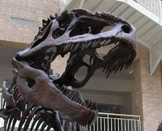 Fernbank Museum of Natural History - Atlanta, GA
