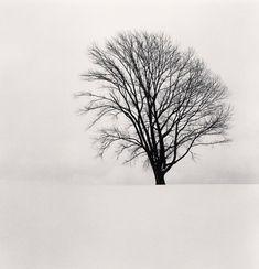 Michael Kenna Philosopher's Tree.......