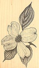 hero arts tree trunk rubber stamp | Botanical Dogwood 2 Wood Mounted Rubber Stamp Impression Obsession ...
