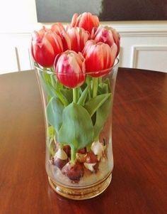 Cómo hacer crecer tulipanes en tu hogar, una técnica muy fácil y que te dejará disfrutar de unas asombrosas flores