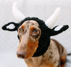 Find cute and funny costumes for sausage dogs, make your sausage dog even more adorable when dressed in a cute dachshund costume. Dog Ears Costume, Dachshund Costume, Dachshund Dog, Dachshunds, Puppy Halloween Costumes, Diy Dog Costumes, Dog Halloween, Halloween Ideas, Elf Pets