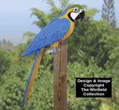 Life-Size Blue Macaw Wood Pattern Have your own pet tropical bird without all the mess and noise! Wood Craft Patterns, Wooden Pattern, Diy Wood Projects, Wood Crafts, Garden Projects, Blue Macaw, Bird House Feeder, Wood Bird, Wooden Animals