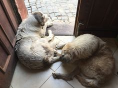 Ibo and Nuri like to hang out in the doorway, watching the world of our four-corners, protecting us from all evil Four Corners, Love To Meet, Meeting New People, Doorway, Hanging Out, How To Introduce Yourself, Workplace, Pets, Animals
