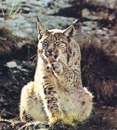 naturaleza animales salvajes - Buscar con Google