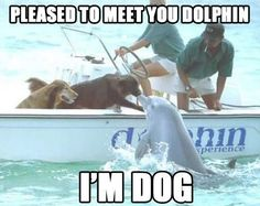 Top 30 Very Funny Animals Memes | Quotes and Humor