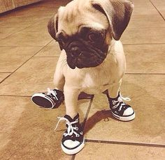 There's just something about dogs and footwear that makes it impossible not to smile.