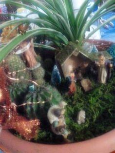 presepe nel vaso con piante