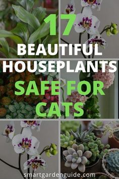17 beautiful houseplants safe for cats. The most beautiful flowering and non-flowering indoor plants that are completely cat safe. Ive picked some of my personal favorites, including some beautiful and easy to care for houseplants that your cat will like Cat Safe House Plants, Houseplants Safe For Cats, Easy House Plants, Cat Plants, Garden Plants, Safe Plants For Cats, Flowering House Plants, Garden Beds, Garden Care