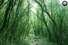 Mi bosque Ideal es aquel que está lleno de vida, me envuelve y atrapa. Mi bosque Ideal canta, llora, disfruta del sol y de la luna, de la calma, del viento y la tormenta; mi bosque Ideal se renueva, perdura, sufre, resucita, palpita y cambia sin cesar. Diego.S.Olivera