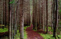 Suomen metsä