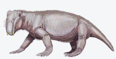Resultado de imagen para lystrosaurus