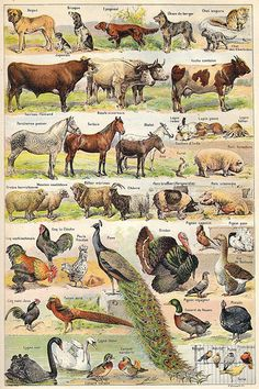 Illustrated plates from the Larousse Universel in two volumes of 1922. - I live and breathe this type of agricultural illustration