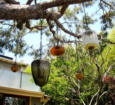Love this: lanterns in an old tree at the #VeniceCanals in Venice Beach, CA #BucketList