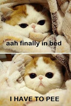 """""""Ahh, finally in bed.... I have to pee."""" Kitties understand!"""