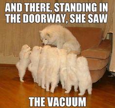Funny Dog Memes, Funny Animal Memes, Cat Memes, Funny Dogs, Funny Animals, Cute Animals, Meme Meme, Baby Animals, Digital Painting Tutorials