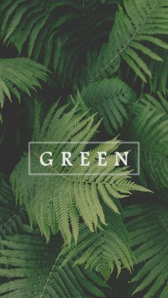 Shared by Lucian. Find images and videos about aesthetic, nature and green on We Heart It - the app to get lost in what you love. Green Wallpaper, Colorful Wallpaper, Cool Wallpaper, Mobile Wallpaper, Cool Backgrounds For Iphone, Wallpaper Backgrounds, Iphone Wallpaper, Chillout Zone, Friendzone
