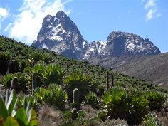 Mount Kenya looks like a pretty cool place. I love the plants.