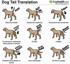 Dog Agility Dog tail movement and position can be quite expressive. Training Your Puppy, Dog Training Tips, Agility Training, Training Pads, Training Classes, Potty Training, Training Academy, Training Videos, Training Online