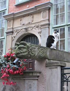 Gdansk - kaunis kaupunki, jossa silmä lepää vaan jalat eivät