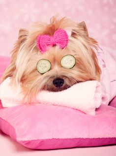 7 puppies that are having a better spa . The post 7 Puppies That Are Having A Better Spa Day Than You appeared first on Dogs and Diana. Super Cute Animals, Cute Little Animals, Cute Funny Animals, Cute Baby Dogs, Cute Dogs And Puppies, Cute Animal Pictures, Funny Animal Pictures, Tattoo L, Dog Spa