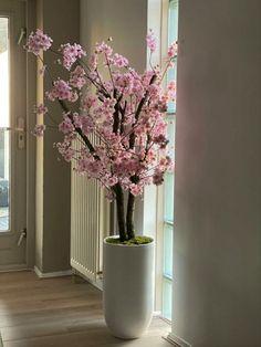 Buiten staat de bloesem prachtig in bloei, Maar ook binnen is de bloesem sfeervol. Bloesem boompje kunstbloemen op een echte natuurlijke stam. Leuk voor op bedrijf, kantoor, hal, wachtkamer,kantine, of spreekkamer. En bovendien onderhoudsvriendelijk. www.decoratietakken.nl Tall Planters, Tall Vases, Cherry Blossom Tree, Blossom Trees, Spring Window Display, Paradise Plant, Home Office Setup, Flower Arrangements, Doorway